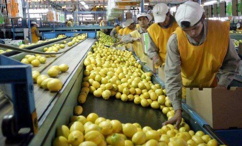 competitividad del limón