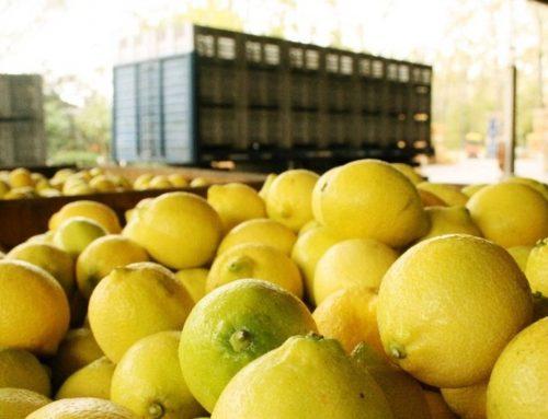 Informe semanal de las exportaciones de cítricos a todo el mundo