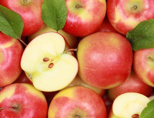 Mejor calidad de fruta proyecta una buena temporada para las manzanas argentinas