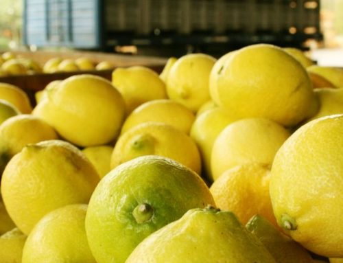 España: Estiman 1,3 toneladas de limón para la próxima campaña