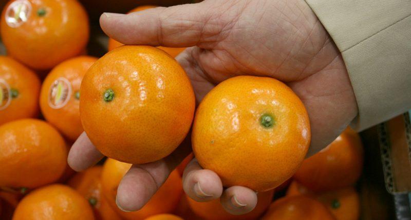 España: Lanzan variedad de mandarinas