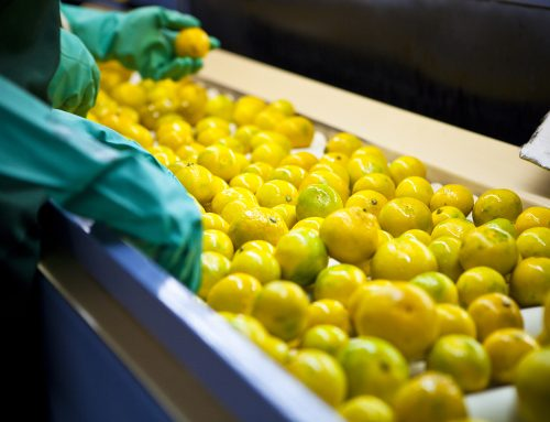 España: La campaña citrícola puede ser récord en exportación, venta de zumo a la industria y consumo