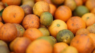 destacan el trabajo de la cadena citrícola para prevenir el HLB