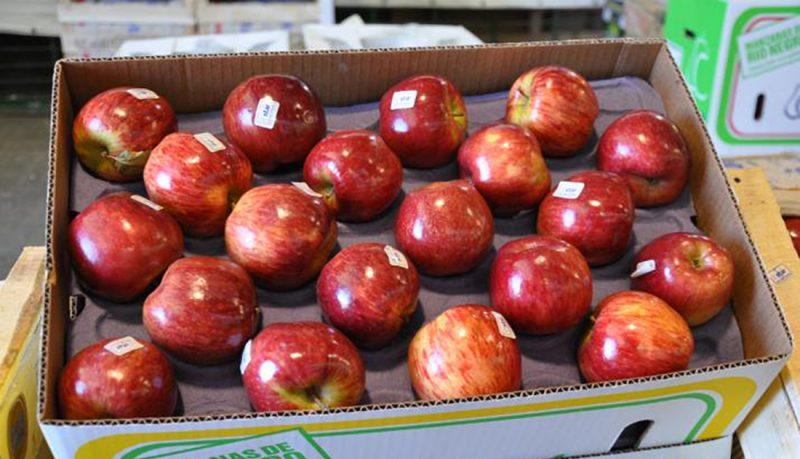 Manzanas y Peras