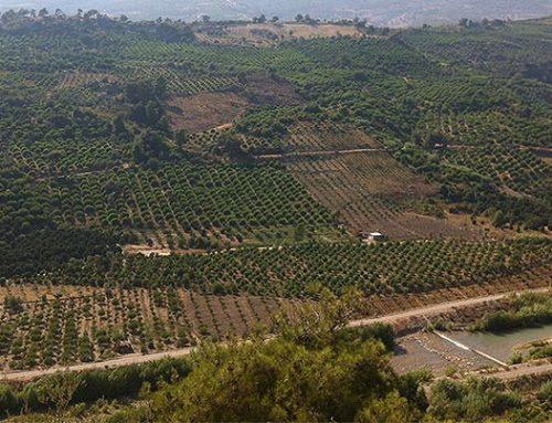 Durante la temporada 2017/2018 los limones turcos han registrado seis alertas sanitarias