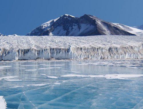 Descubren unos hongos en la Antártida que podrían ayudar a combatir el chancro de los cítricos