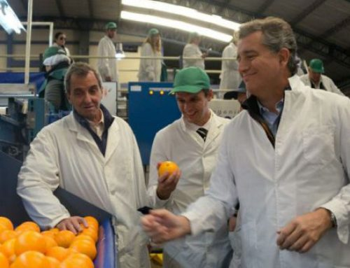 Tras 7 años, Argentina vuelve a exportar mandarinas a China