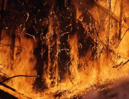 Estados Unidos: Incendios forestales de California no afectan a cítricos ni aguacates