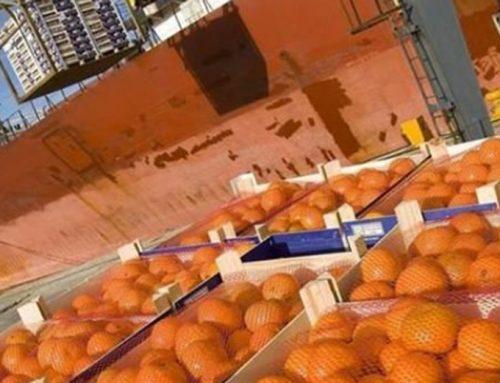 Las exportaciones de cítricos siguen en caída y piden declarar la emergencia del sector