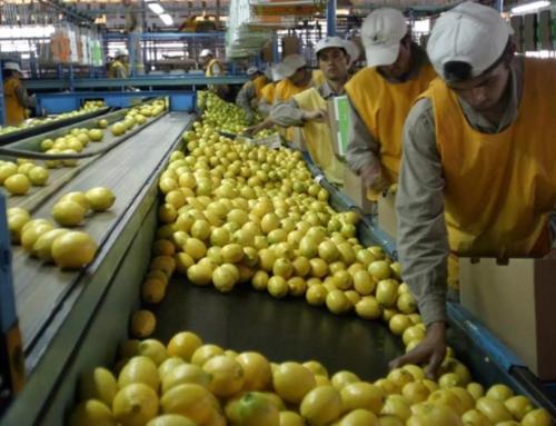 La productora de limones más grande de Argentina recibió financiamiento por 100 millones de dólares