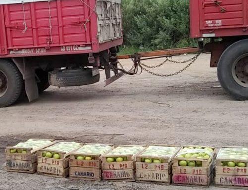 Se evitó la introducción al circuito comercial de 175 kg de limones