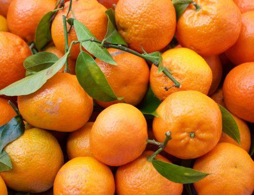 Resumen del mercado mundial de la naranja