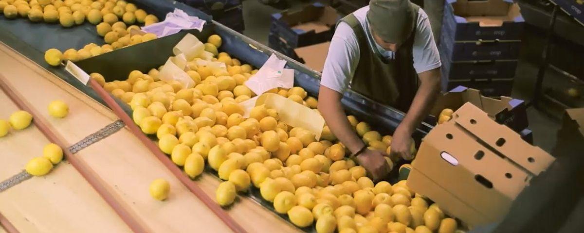 Convenio de Corresponsabilidad Gremial en limón
