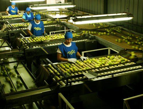 Habilitación de dos depósitos fiscales para exportar limones a Estados Unidos
