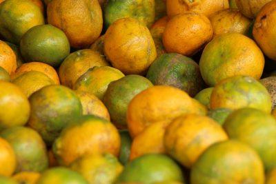 cosecha de naranja