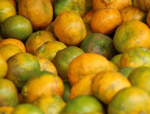 Brasil: Previsiones de cosecha de naranja 2019-2020