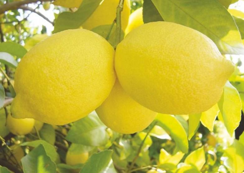 limón africano
