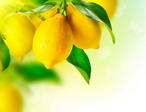 Segunda temporada de limones argentinos en EE.UU. se complica por lluvias