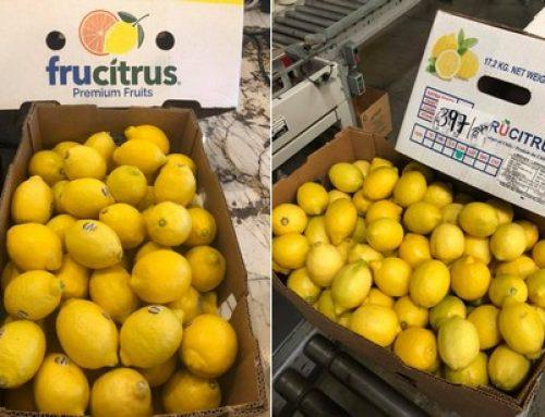 La gran oferta de limón en EE. UU. mantiene tranquilo el mercado