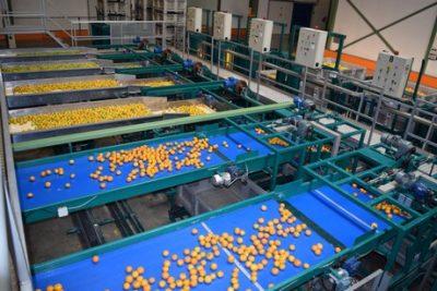 cosecha de cítricos