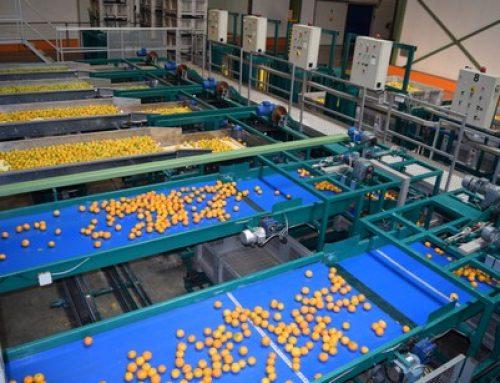 Se espera que la cosecha de cítricos españoles descienda sobre todo en clementinas