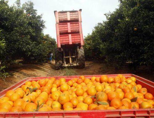 Alertan de la cercanía a Huelva de la enfermedad más devastadora en cítricos