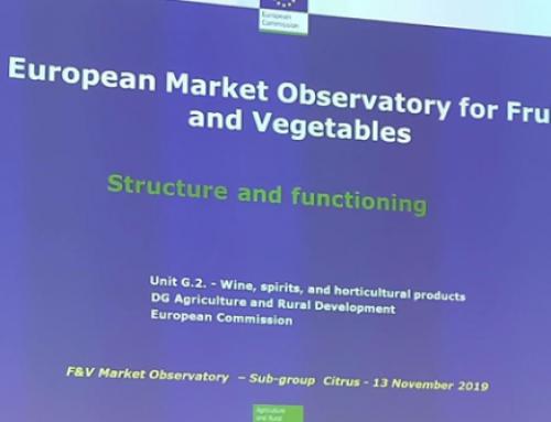 La Organización Mundial de Cítricos presentada en el Observatorio Europeo del Mercado de Cítricos