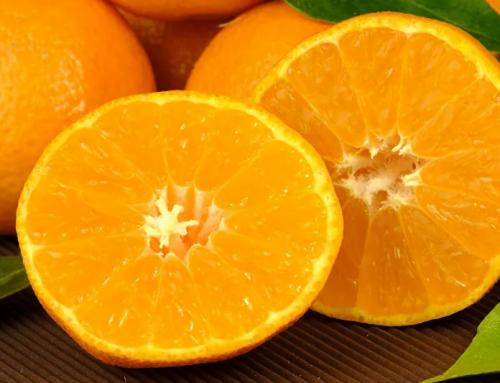Los volúmenes de naranjas egipcias exportados superan a los de España y Sudáfrica