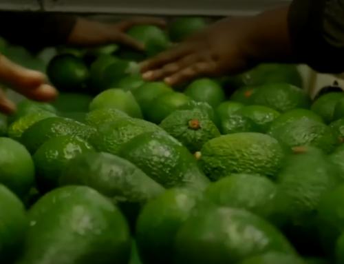 Las frutas y hortalizas frescas serán más escasas en Europa