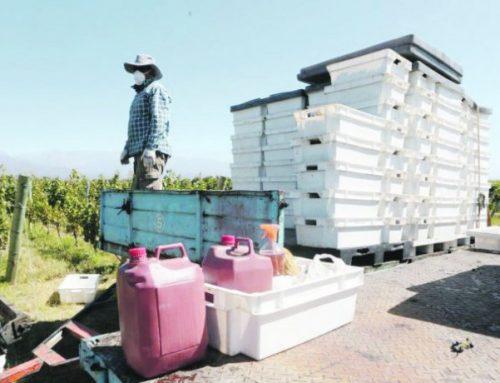 Aplican protocolos para mantener cosechas activas