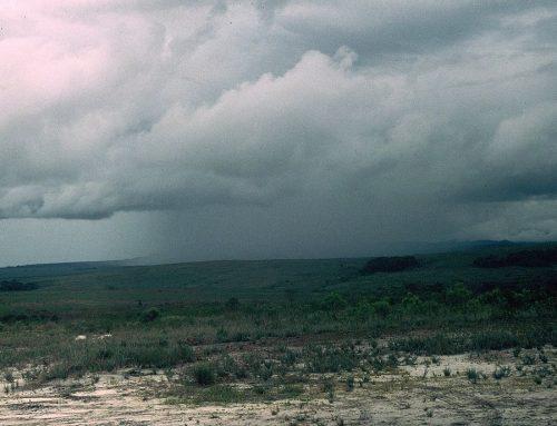 Las lluvias pueden provocar asfixia en cultivos y pudrición de cítricos