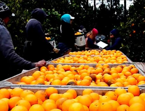 Federcitrus alerta sobre dificultades para trasladar cosecheros ante el bloqueo de municipios