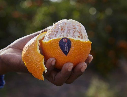 Sudáfrica: Este año las Navel tienen la oportunidad de sobresalir