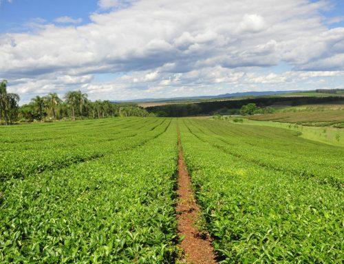 """Dos nuevas empresas obtienen el sello de Calidad """"Alimentos Argentinos, una Elección Natural"""""""