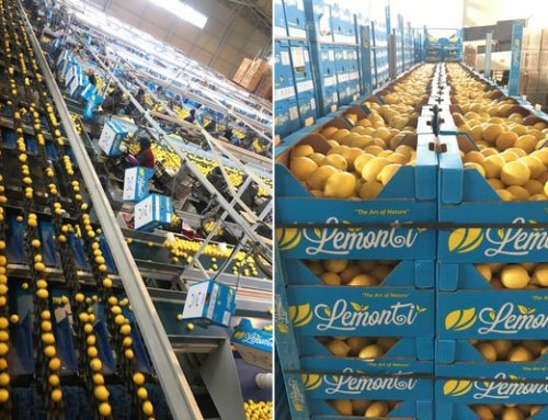 """""""La prohibición de exportar limón en Turquía ha afectado gravemente a nuestra empresa"""""""