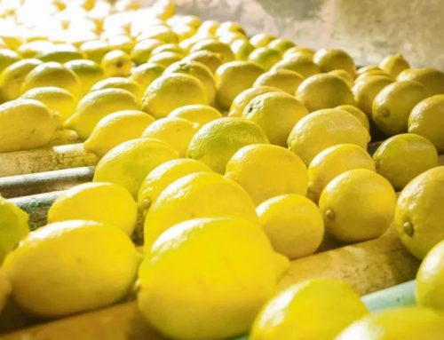 El volumen exportado de limón español se mantiene estable