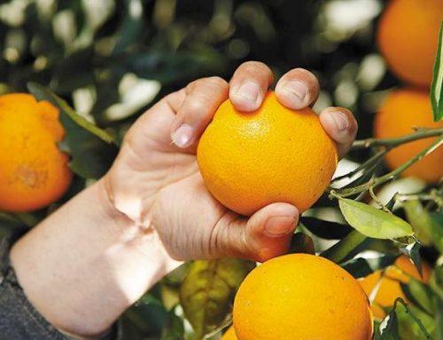 De Tucumán a China: los jugos Citric desembarcan en el país asiático ante la demanda de vitamina C