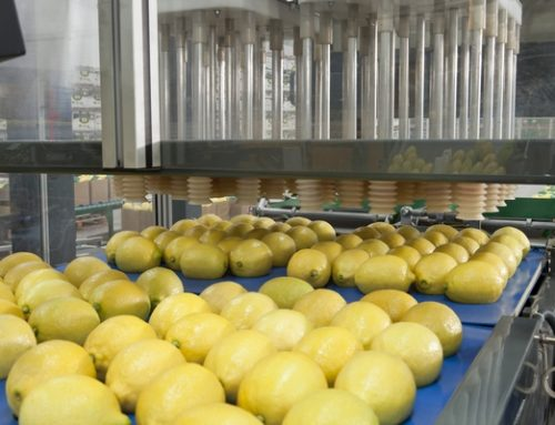 """""""Somos la primera empresa argentina en exportar limón a China"""""""