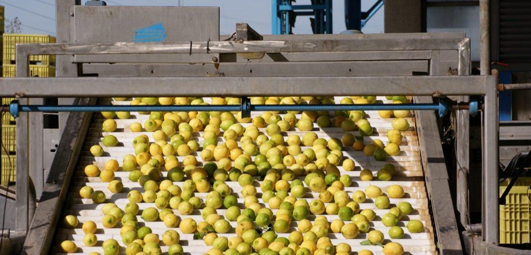 Tucumán trabaja fuertemente para retomar los embarques de limón a la Unión Europea