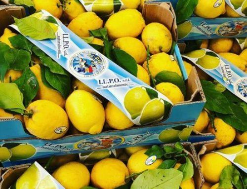 Alta demanda de limones y naranjas en Alemania, pero se avecina escasez de oferta