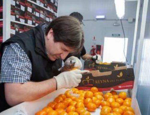 Súbita decisión de la UE de suspender las exportaciones de cítricos argentinos