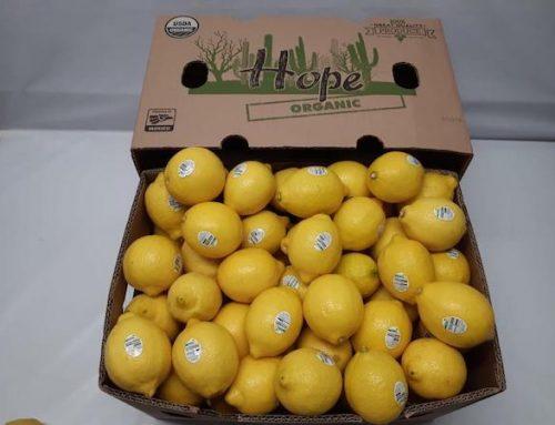 Los reducidos volúmenes internos hacen que el mercado de importación de limón de EE. UU. sea muy fuerte