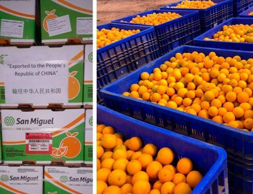 De Jujuy al mundo: se realizó la primera exportación de naranjas jujeñas a China