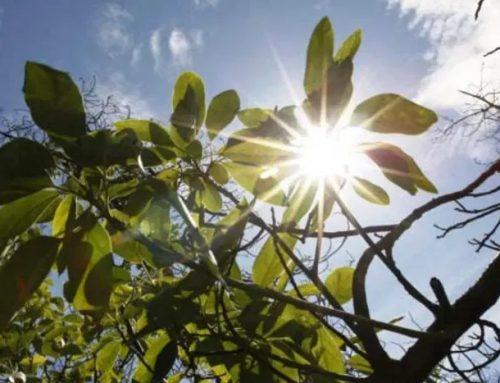 «La Niña» ya es oficial y traerá una primavera con pocas lluvias y menos calor