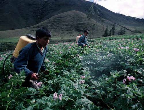 España vende a América Latina y África pesticidas prohibidos por la Unión Europea