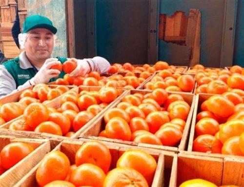 Exportaciones de mandarina crecen 29% en volumen y 32% en valor hasta la quincena de septiembre