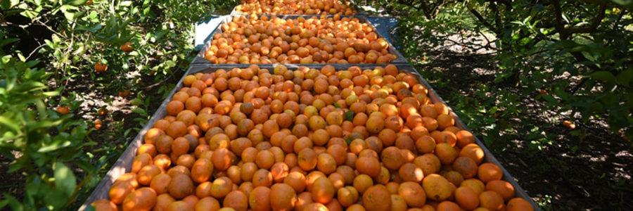 Bordet valoró la sanción de la prórroga de la emergencia para el sector citrícola