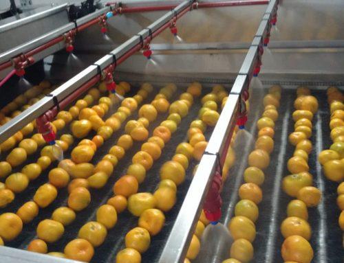 Empaques y cámaras de frío de frutas y hortalizas no podrán gestionar destino minorista