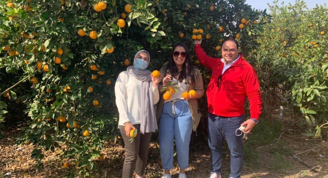 Compañía egipcia envía cítricos a Brasil