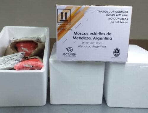 La Argentina exporta moscas del mediterráneo estériles a Bolivia y Chile
